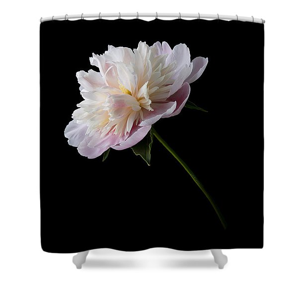 Pink And White Peony Shower Curtain