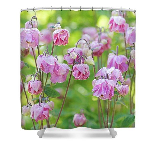 Pink Aquilegia Flowers Shower Curtain
