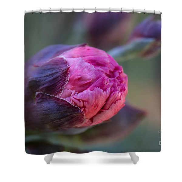 Pink Carnation Bud Close-up Shower Curtain