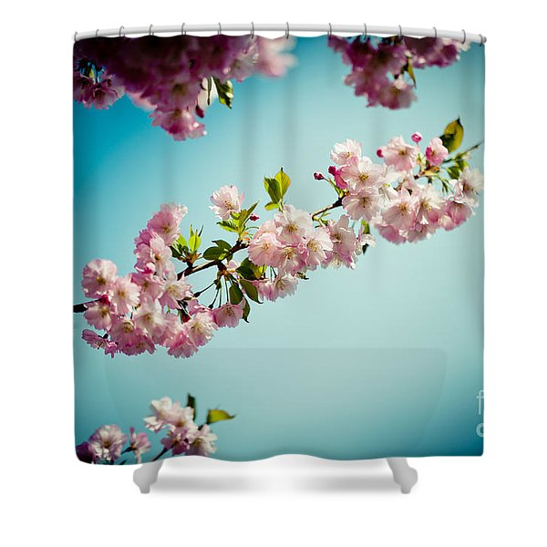 Shower Curtain featuring the photograph Pink Cherry Blossoms Sakura Against Clear Blue Sky by Raimond Klavins