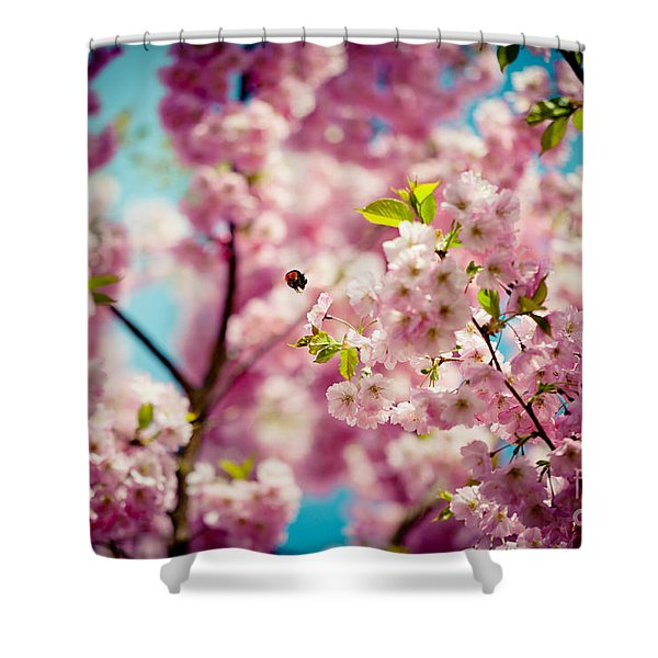 Shower Curtain featuring the photograph Pink Cherry Blossoms Sakura With Bee by Raimond Klavins
