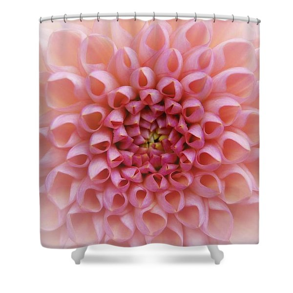Pink Chrusanthemum Shower Curtain