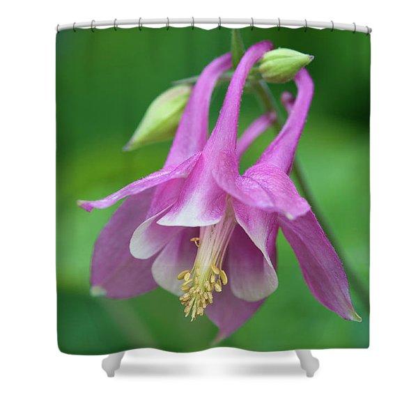 Pink Columbine - D010096 Shower Curtain