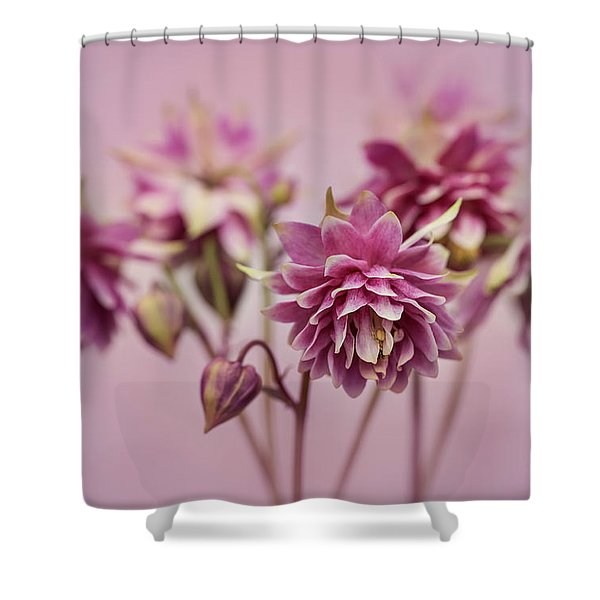 Shower Curtain featuring the photograph Pink Columbines by Jaroslaw Blaminsky