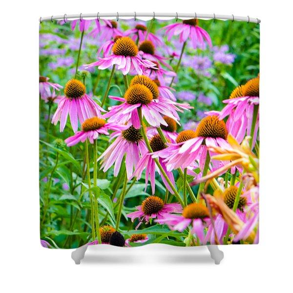 Pink Coneflower Shower Curtain