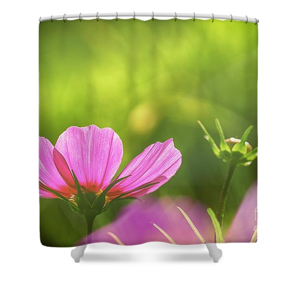 Pink Cosmos Shower Curtain