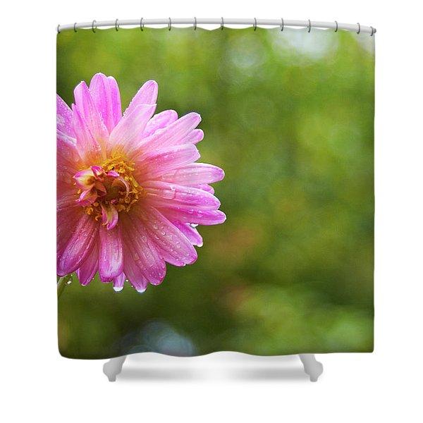 Pink Dahlia 1 Shower Curtain