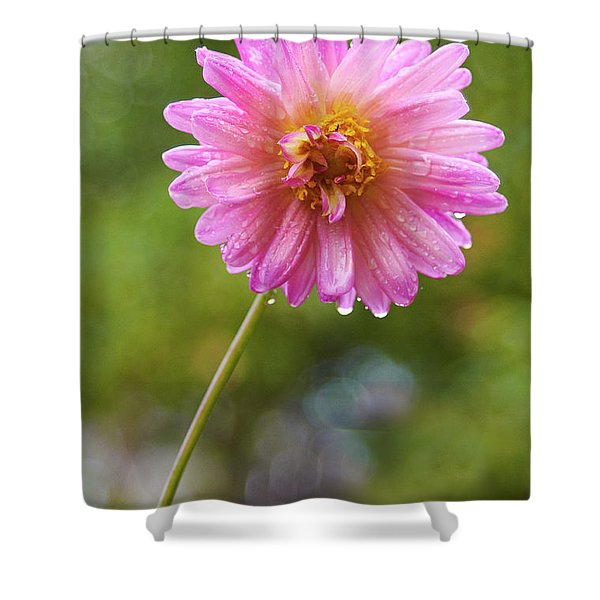 Pink Dahlia 2 Shower Curtain