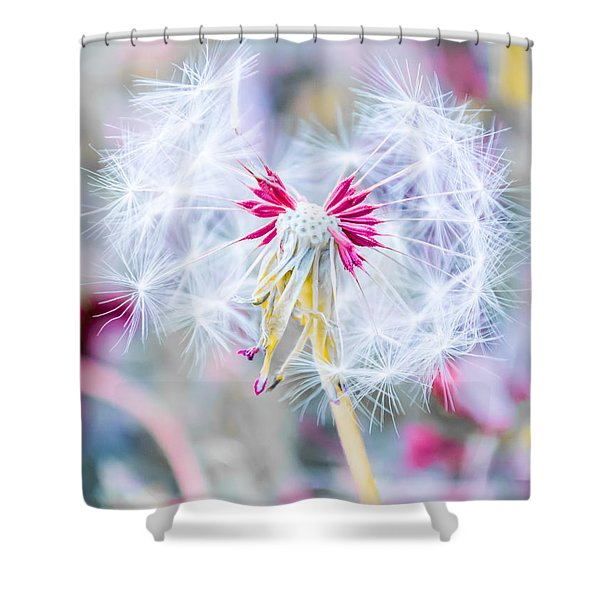 Pink Dandelion Shower Curtain