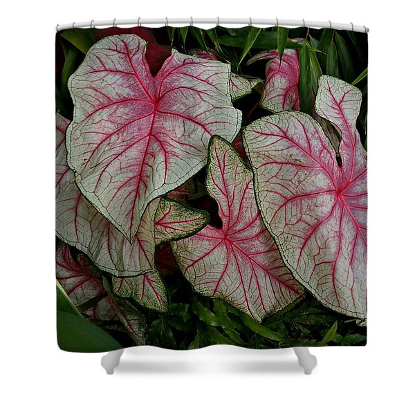 Pink Elephant Ear Plant Shower Curtain