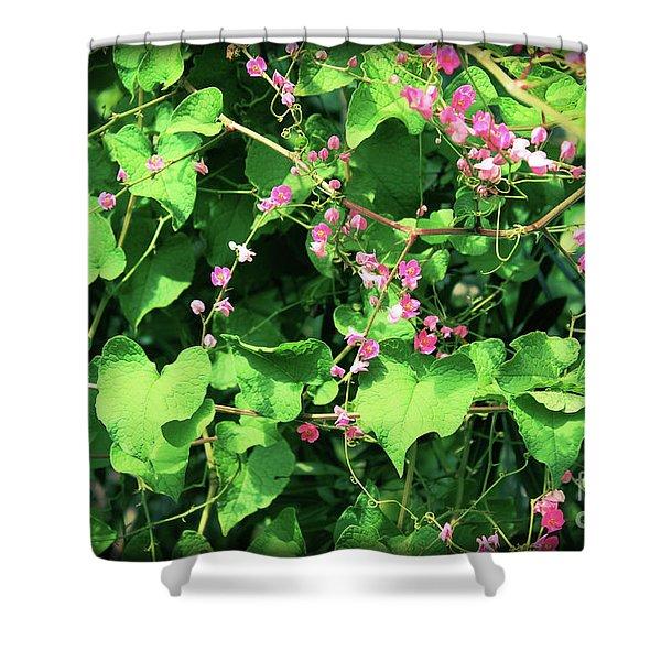 Pink Flowering Vine2 Shower Curtain