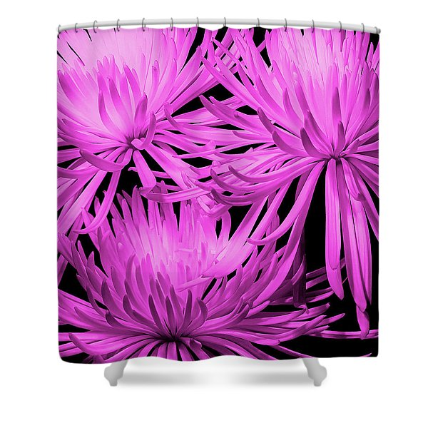 Pink Fuji Spider Mums Shower Curtain
