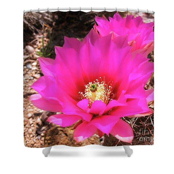 Pink Hedgehog Flower Shower Curtain