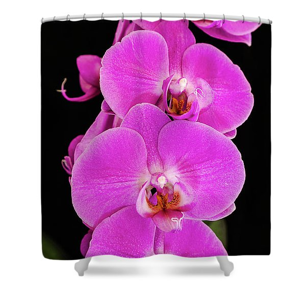 Pink Orchid Against A Black Background Shower Curtain