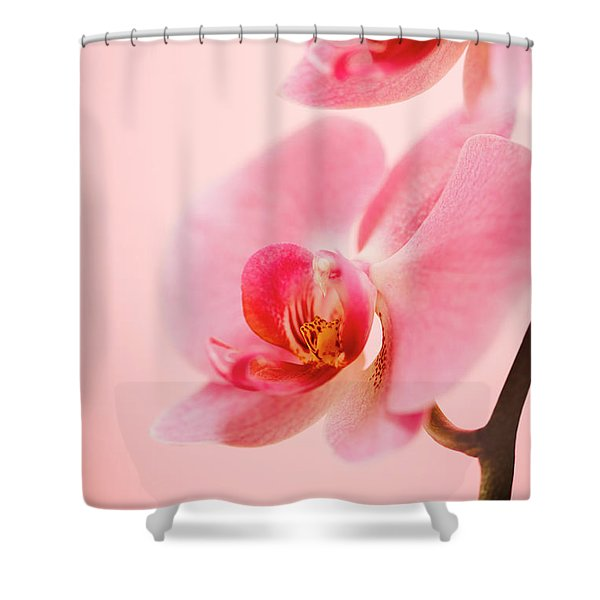 Pink Orchid Closeup Shower Curtain