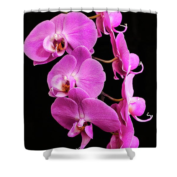 Pink Orchid With Black Background Shower Curtain
