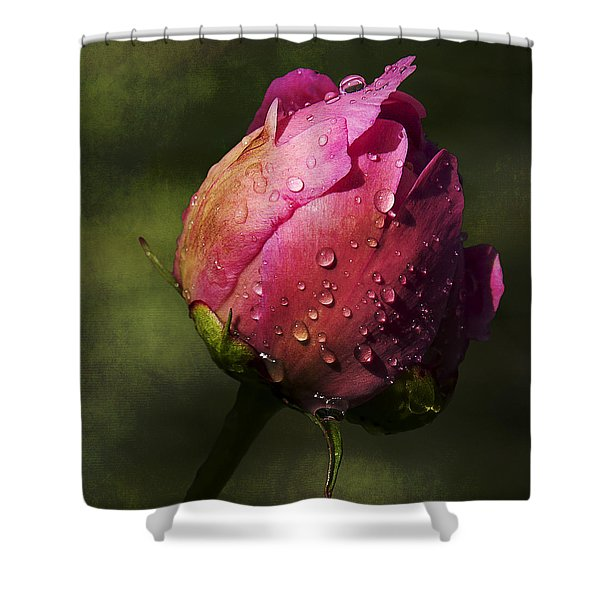 Pink Peony Bud With Dew Drops Shower Curtain