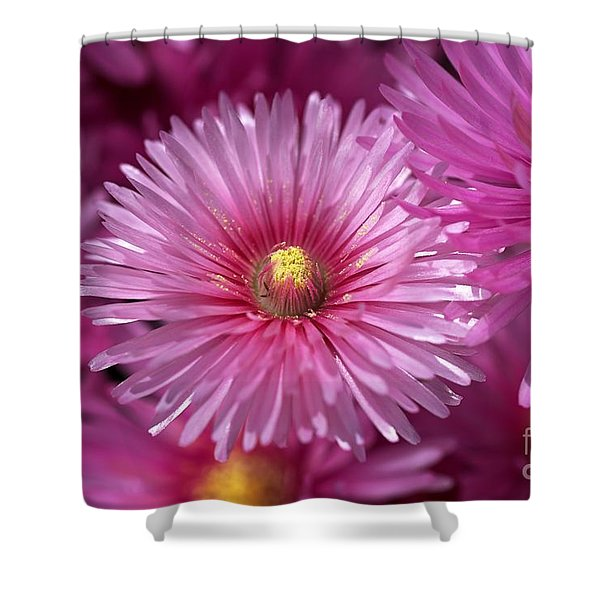Pink Pigface Flowers Shower Curtain
