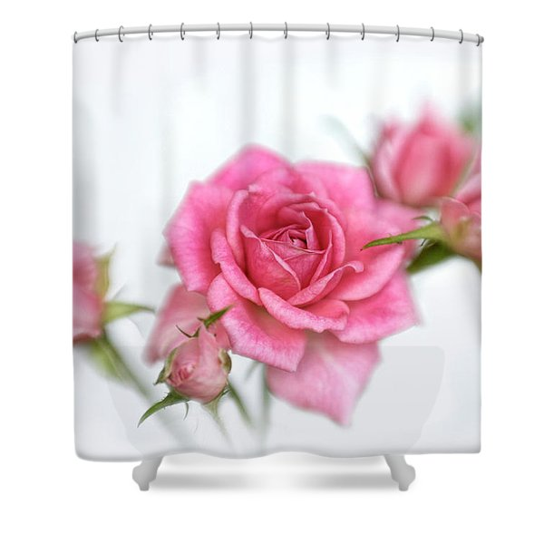 Pink Rose And Buds Shower Curtain