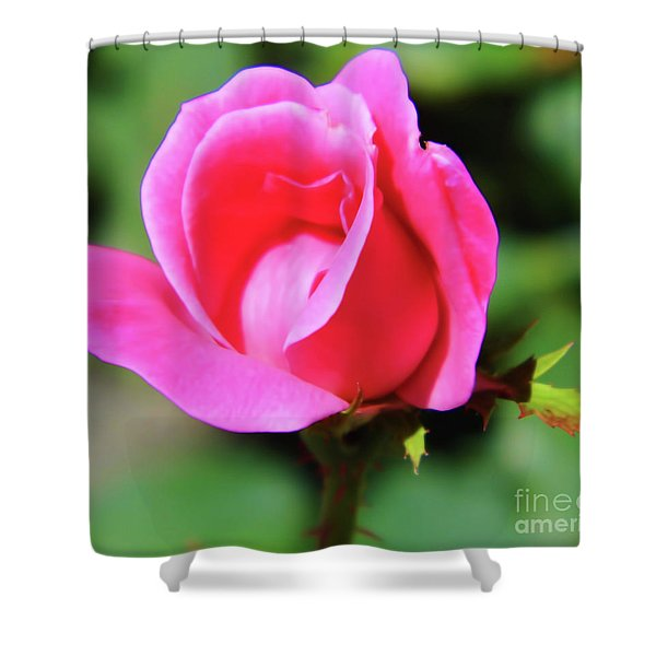 Pink Rose Bud Shower Curtain