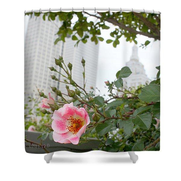 Pink Rose Of Tulsa Shower Curtain