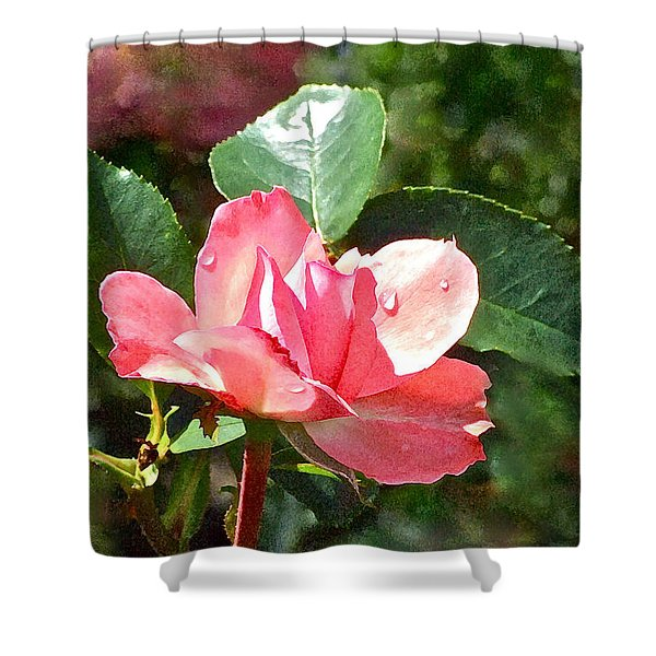 Pink Roses In The Rain 2 Shower Curtain