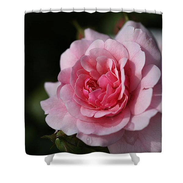 Pink Shades Of Rose Shower Curtain