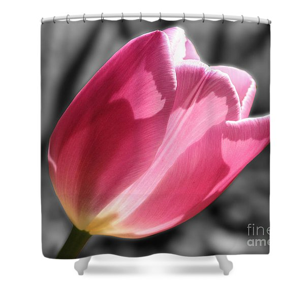 Pink Tulip On Black And White Shower Curtain