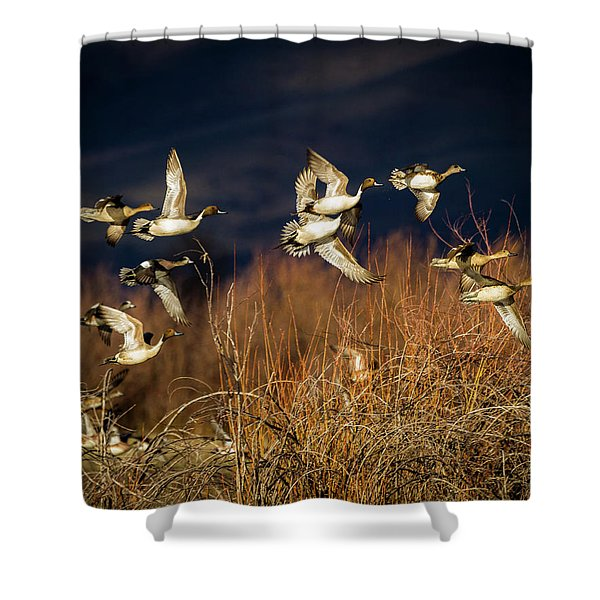 Pintails And Wigeons Shower Curtain