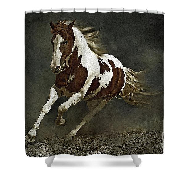 Pinto Horse In Motion Shower Curtain