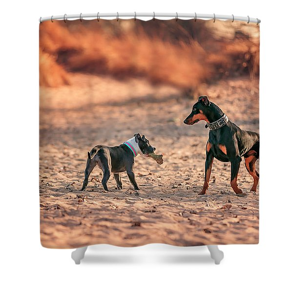 Pitbull And Doberman Shower Curtain