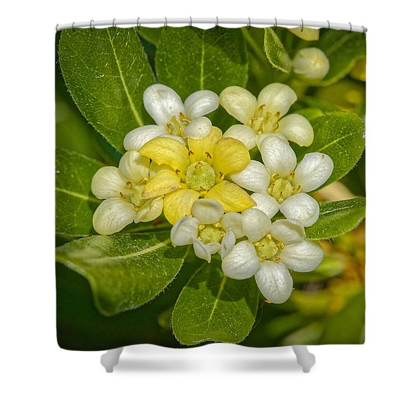 Pittosporum Flowers Shower Curtain