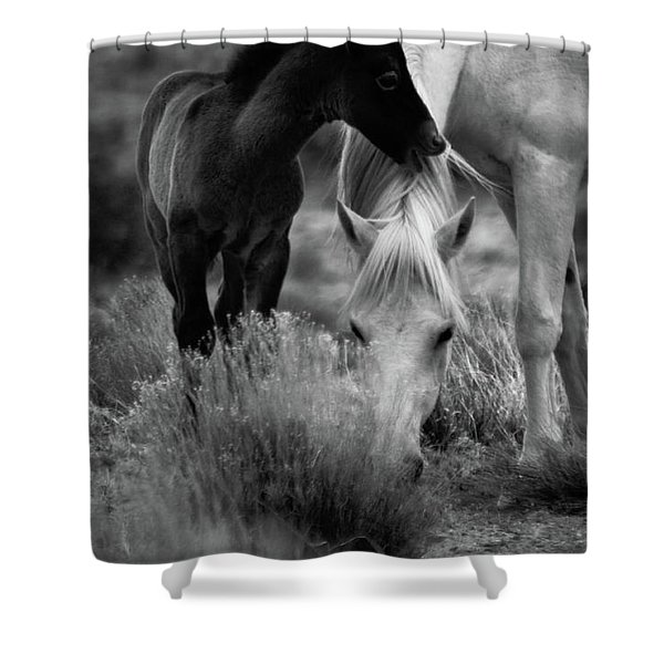 Shower Curtain featuring the photograph Placitas 2 by Catherine Sobredo