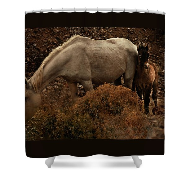 Shower Curtain featuring the photograph Placitas 6 by Catherine Sobredo