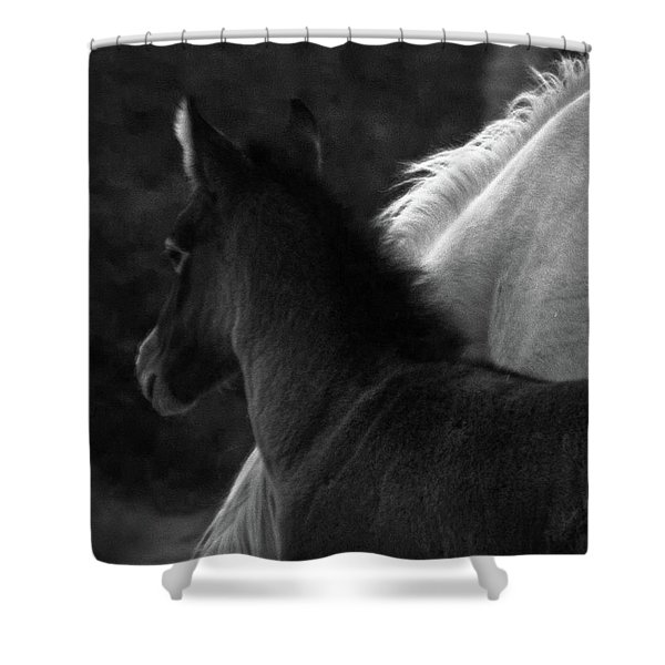 Shower Curtain featuring the photograph Placitas 9 by Catherine Sobredo
