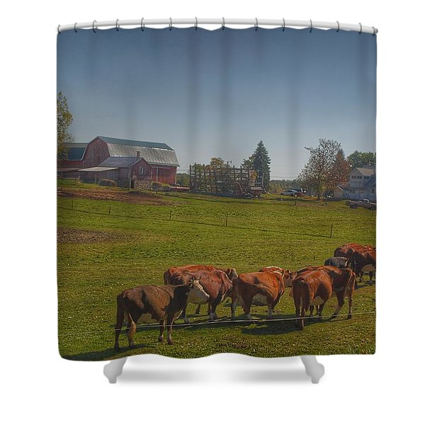 1014 - Plain Road Farm And Cows I Shower Curtain