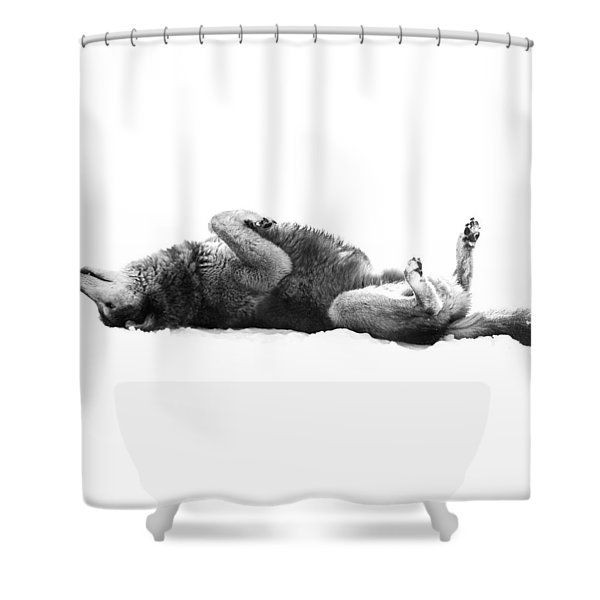 Playful Gray Wolf Photo Shower Curtain