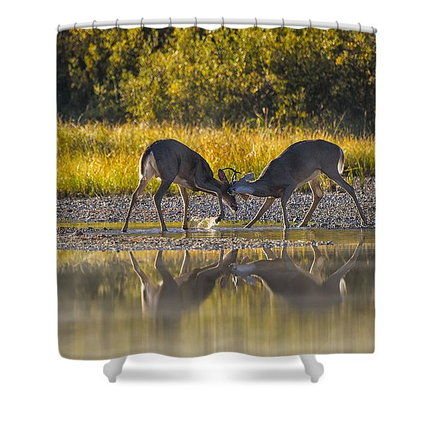 Playful Young Bucks Shower Curtain