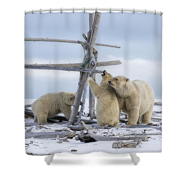 Playtime In The Arctic Shower Curtain