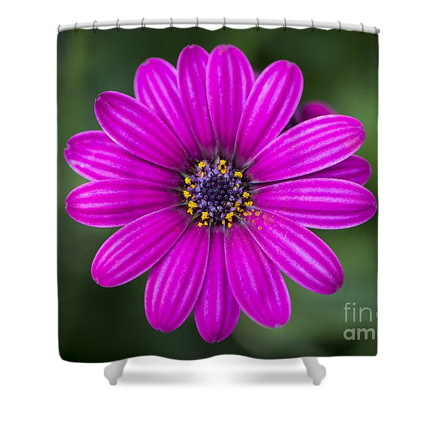 Shower Curtain featuring the photograph Pleasing Purple by Andrea Silies