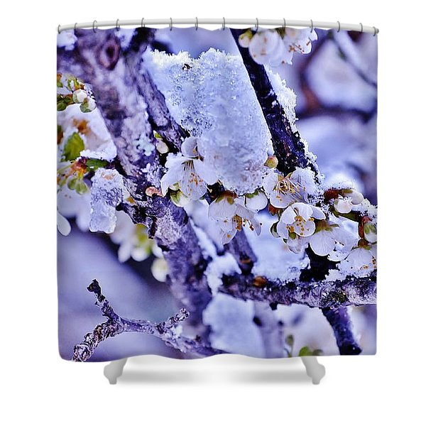 Plum Blossoms In Snow Shower Curtain