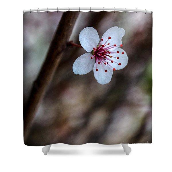 Plum Flower Shower Curtain