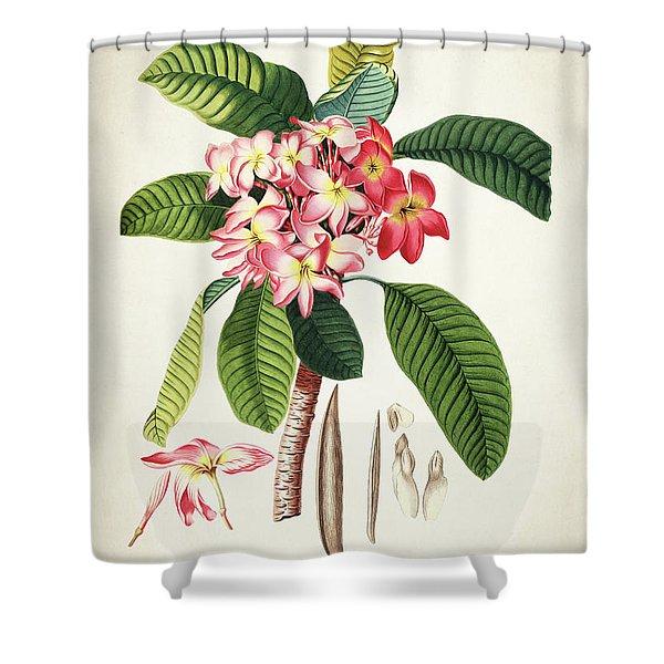 Plumeria Botanical Print Shower Curtain