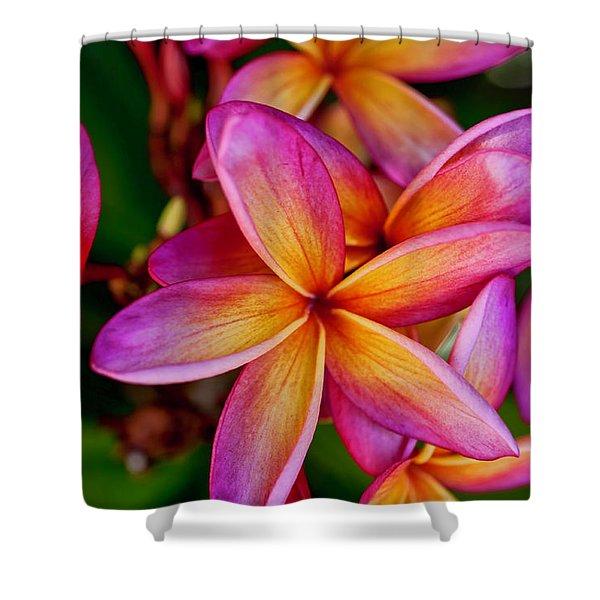 Plumeria Shower Curtain