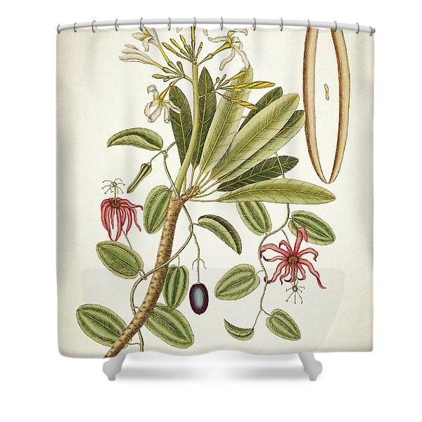 Plumeria Obtusa Botantical Print Shower Curtain