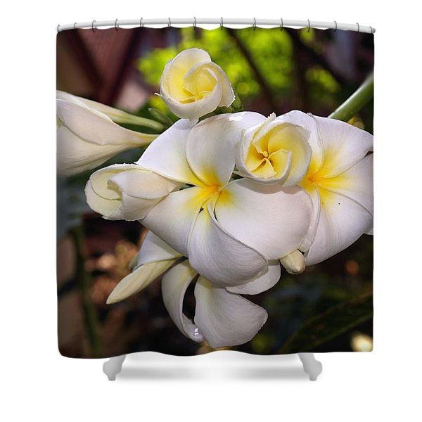 Plumeria Portrait Shower Curtain