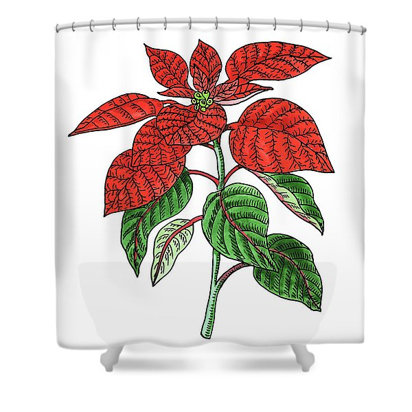 Poinsettia Plant Watercolor Shower Curtain