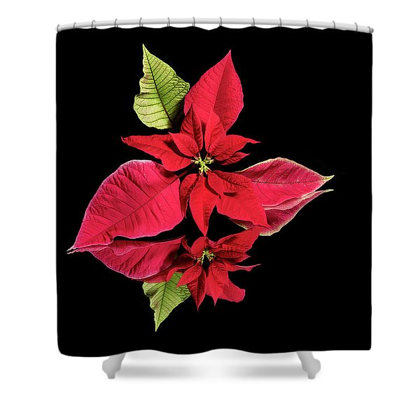 Poinsettia Reflection  Shower Curtain