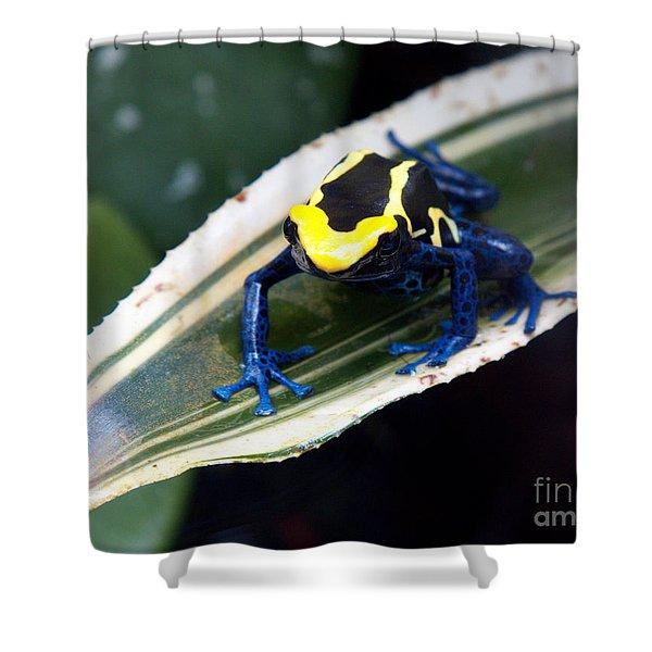 Poison Dart Frog Shower Curtain