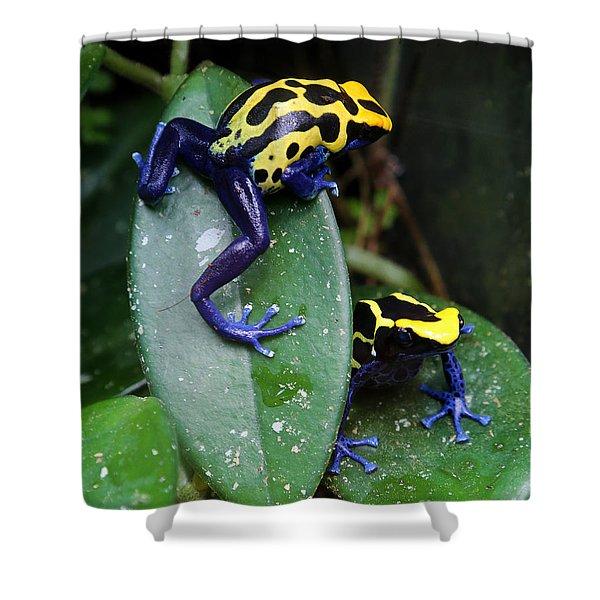 Poisonous Dart Frogs Shower Curtain